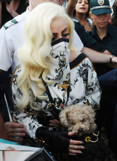 lady gaga and her new dog